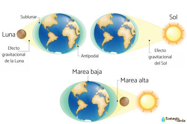 Qué son las mareas y por qué se producen - Qué son las mareas