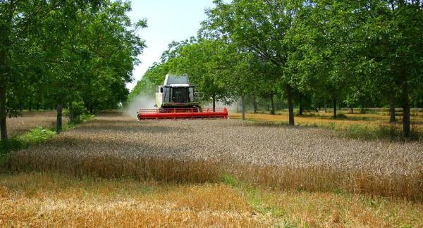 Qué es la agroecología y su importancia