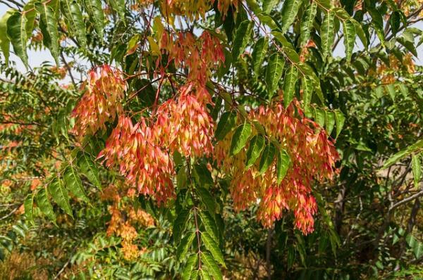 Plantas invasoras: qué son y ejemplos de especies
