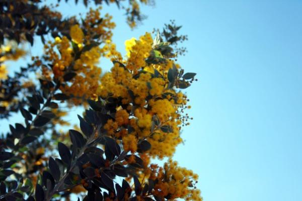 Plantas invasoras: qué son y ejemplos de especies - Qué son las plantas invasoras - definición sencilla