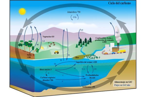 Ciclos biogeoquímicos: qué son, tipos e importancia - Qué son los ciclos biogeoquímicos