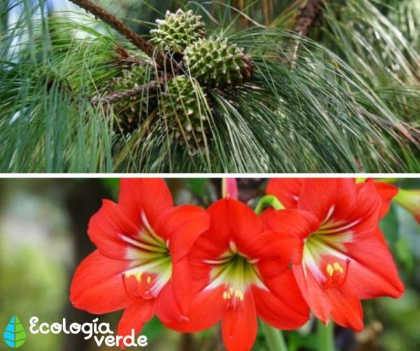 Tipos de flores - Tipos de flores - clasificación de las plantas