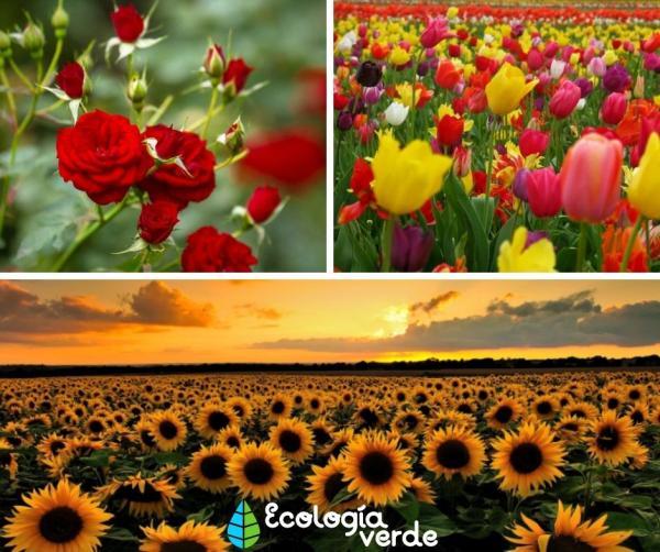 Tipos de flores - Tipos de flores conocidas - nombres de las más famosas