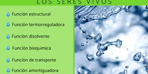 Funciones del agua en los seres vivos