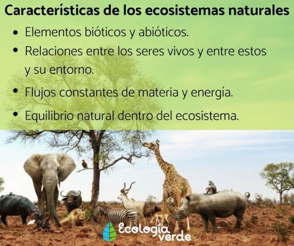 Ecosistema natural: qué es, características y ejemplos - Características de los ecosistemas naturales