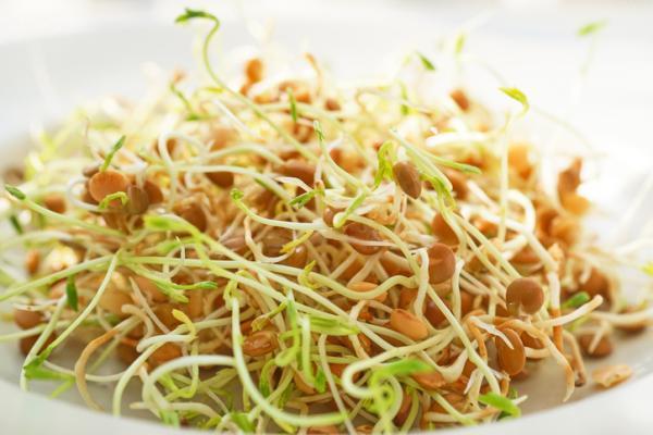 Cómo hacer germinados de lentejas - Qué son los germinados comestibles o brotes