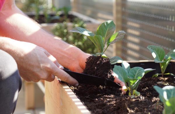 Qué plantar en septiembre - Qué sembrar, trasplantar y cosechar en septiembre