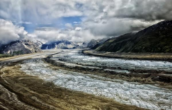 Tundra: características, flora y fauna