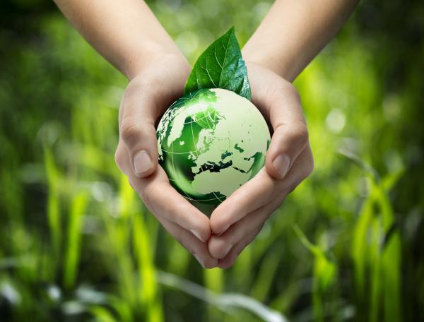 La importancia del medio ambiente