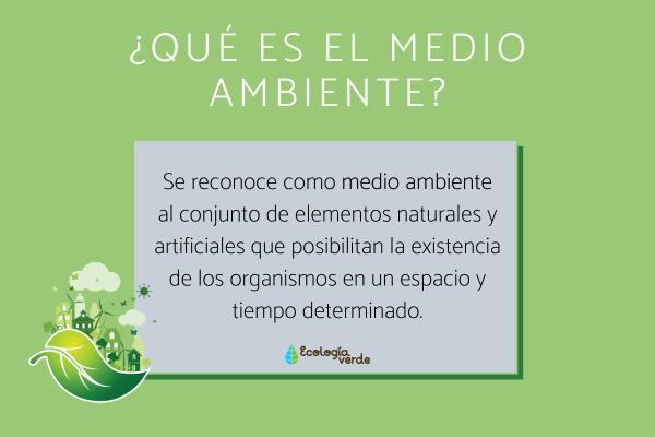 La importancia del medio ambiente - Qué es el medio ambiente