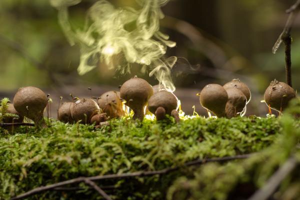 Qué es la esporulación y ejemplos - Esporulación de los hongos