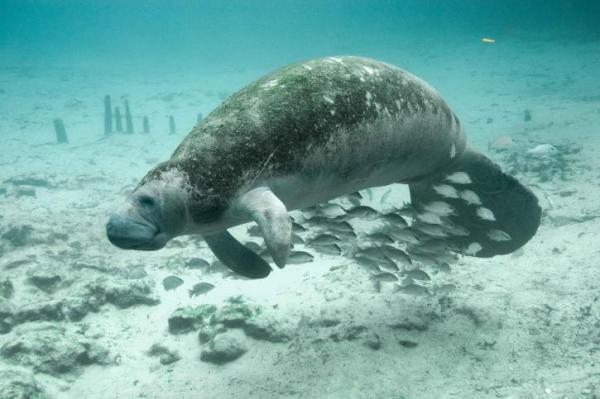 Cuáles son los animales mamíferos marinos -  Los mamíferos marinos