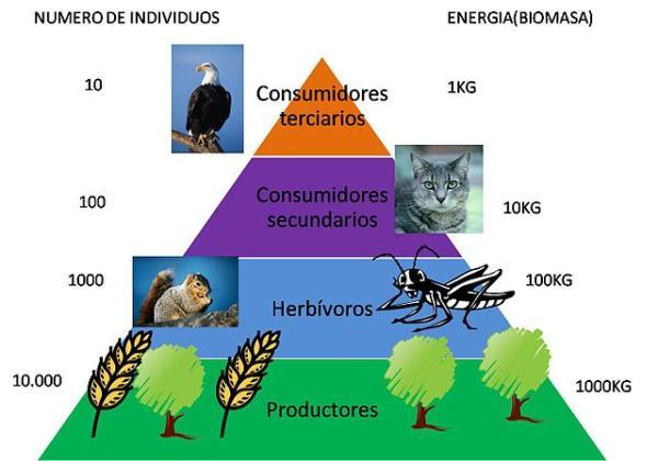 Flujo de energía en los ecosistemas: definición, características y ejemplos - Definición del flujo de materia y energía en los ecosistemas