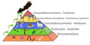 Flujo de energía en los ecosistemas: definición, características y ejemplos