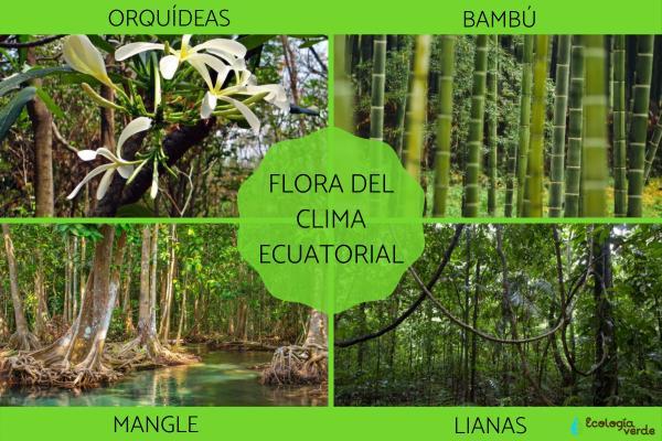 Clima ecuatorial: qué es, características, flora y fauna - Flora del clima ecuatorial