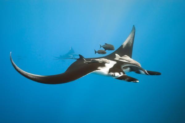 33 peces en peligro de extinción - Otras especies de peces en peligro de extinción