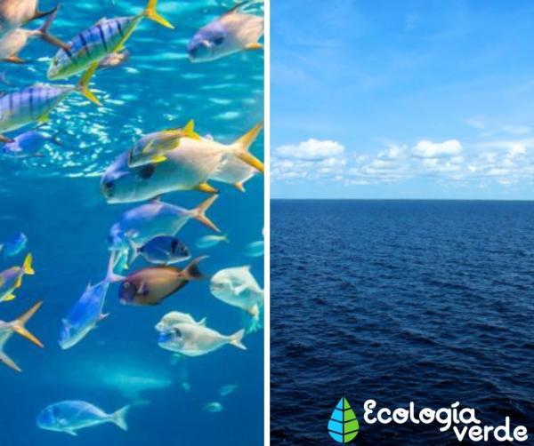 Diferencias entre ecosistema y bioma - Diferencias entre ecosistema y bioma