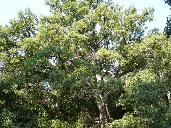 Ejemplos de especies endémicas de España - Especies endémicas de España: flora