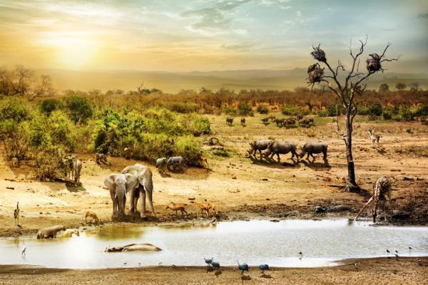 Diferencias entre ecosistema y bioma - Qué es un ecosistema