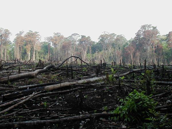 Cómo afecta el cambio climático a la biodiversidad - Qué efecto tiene el cambio climático sobre la biodiversidad