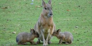 Características generales de los mamíferos terrestres