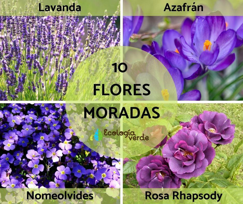 10 Flores Moradas Nombres Características Y Fotos