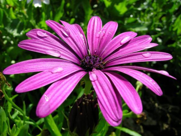 10 flores moradas - Dimorfoteca