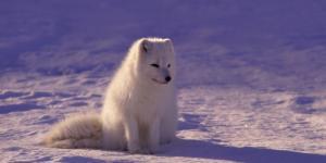 Ecosistema polar: características, fauna y flora