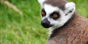 Animales endémicos de Madagascar