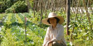 Cómo combatir plagas en agricultura ecológica