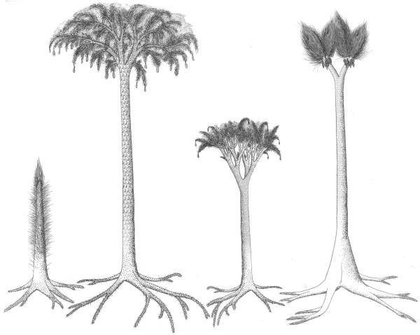 +20 plantas extintas - Lepidodendron