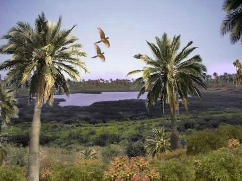 +20 plantas extintas - Palma de Rapa Nui