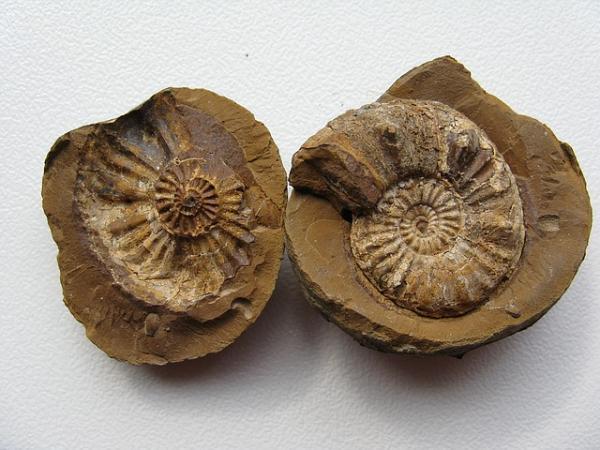 Tipos de fosilización y sus características - Tipos de fosilización según si está el organismo