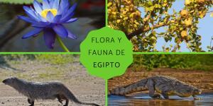 Flora y fauna de Egipto