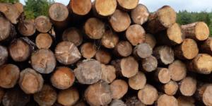 Tipos de madera: características y clasificación