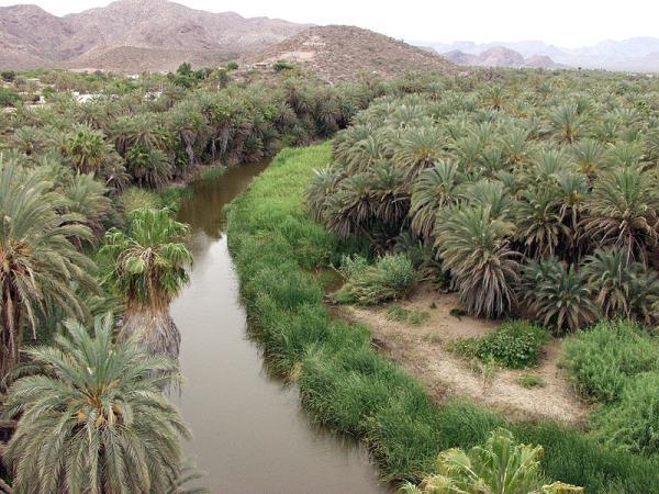 Principales ecosistemas de México y sus características - Lista de los principales ecosistemas de México