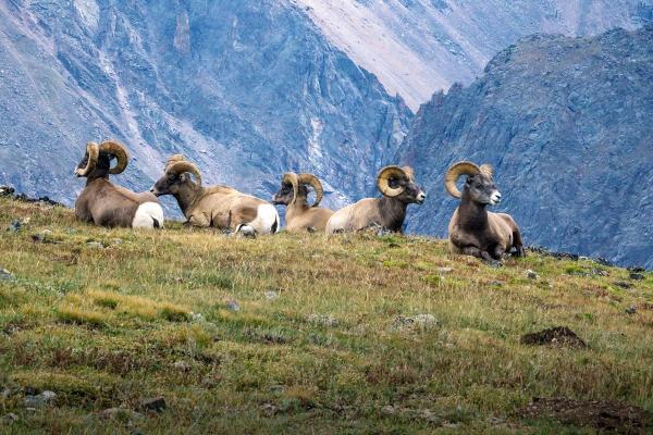 Por qué es importante proteger a los animales en peligro de extinción - El derecho a la vida, el amor y el respeto hacia la fauna