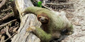 Por qué es importante proteger a los animales en peligro de extinción
