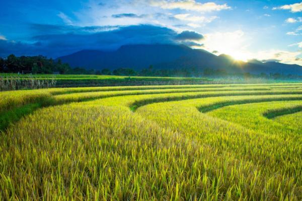 Agricultura extensiva: qué es, características, ventajas y desventajas - Características de la agricultura extensiva