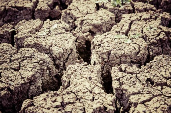 Desertificación: definición, causas y consecuencias - Qué es la desertificación: definición sencilla