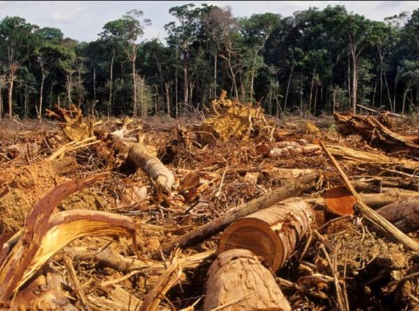 Principales problemas ambientales en Venezuela - Deforestación e incendios forestales en Venezuela