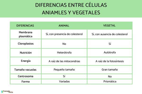Semejanza y diferencia entre célula animal y vegetal - Diferencias entre las células animales y vegetales
