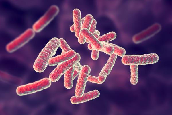 Tipos de bacterias - Tipos de bacterias: bacilos