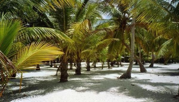 Frutos de las palmeras: cómo se llaman, nombres y tipos
