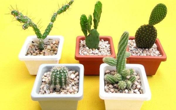 Plantas protectoras que cuidan del hogar - El cactus