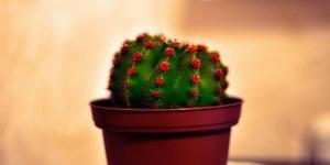 Plantas protectoras que cuidan del hogar