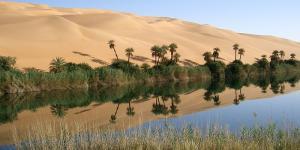 Qué es un ecotono: definición y ejemplos