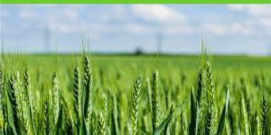 Revolución verde: qué es, ventajas y desventajas