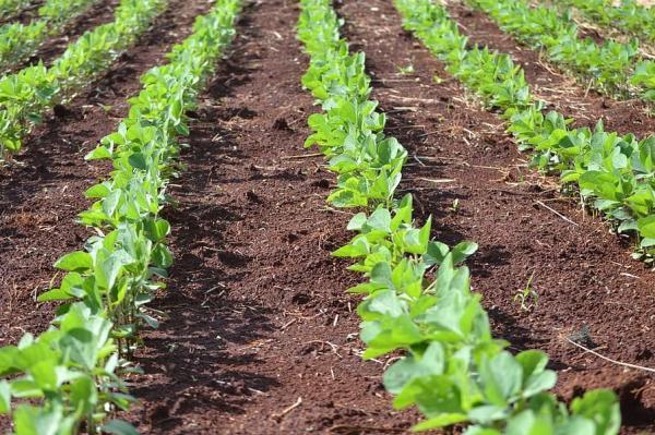 Abono verde: qué es y cómo se hace - Qué es el abono verde y para qué se utiliza