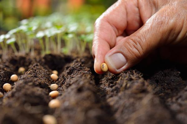 Abono verde: qué es y cómo se hace - Tipos de abono verde